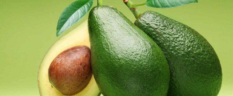 palta greenland per250 exportaci243n de frutas y verduras